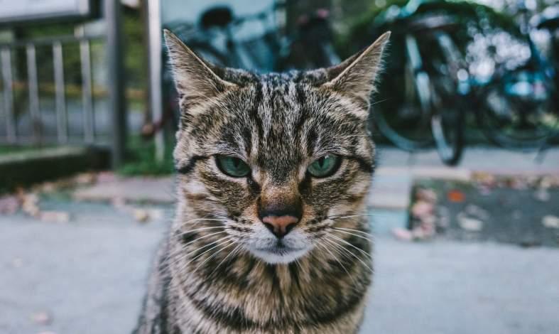 Ailurofobia - skąd się bierze lęk przed kotami? Czy można go wyleczyć?