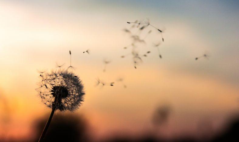Moda czy pomoc w psychoterapii - o co chodzi w mindfulness?