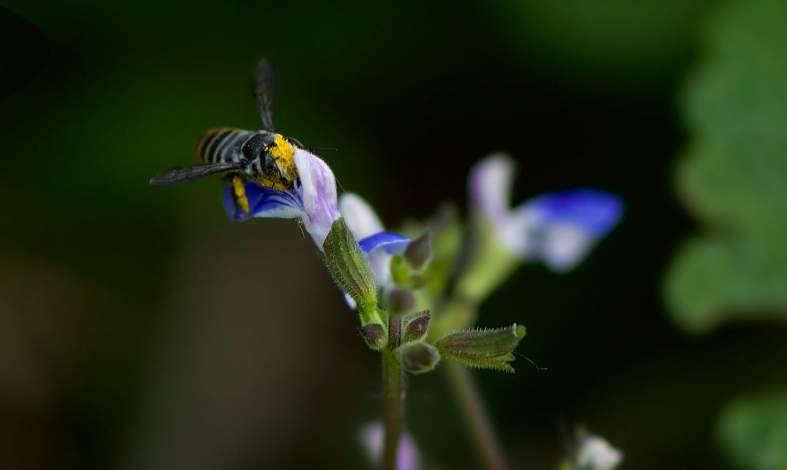 Jakie są przyczyny entomofobii?