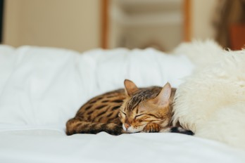 Higiena snu, czyli jak spać, żeby się wyspać?