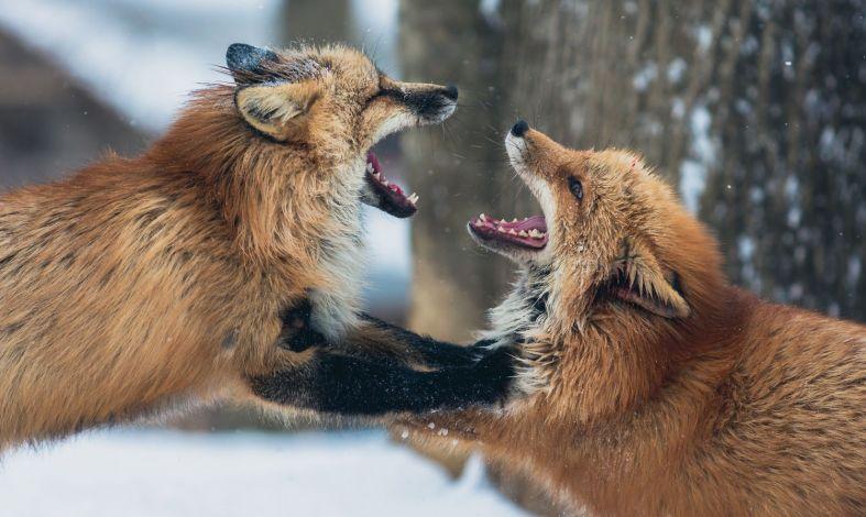Jak się kłócić, żeby się nie pokłócić? Zasady konstruktywnej kłótni