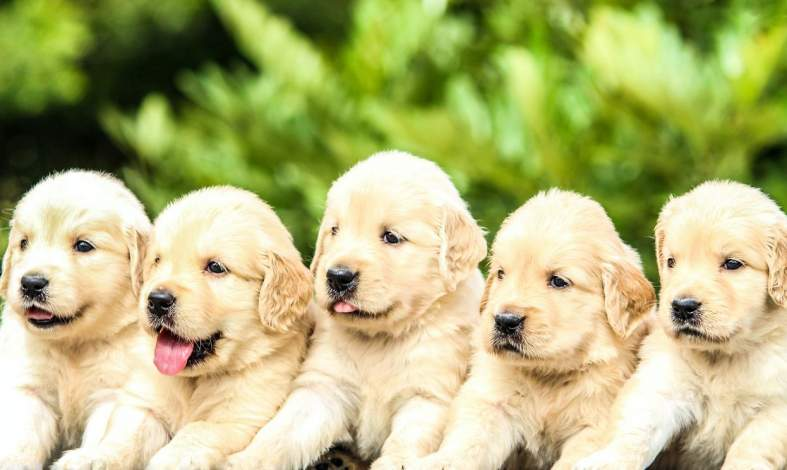 Kynofobia - skąd bierze się lęk przed psami?