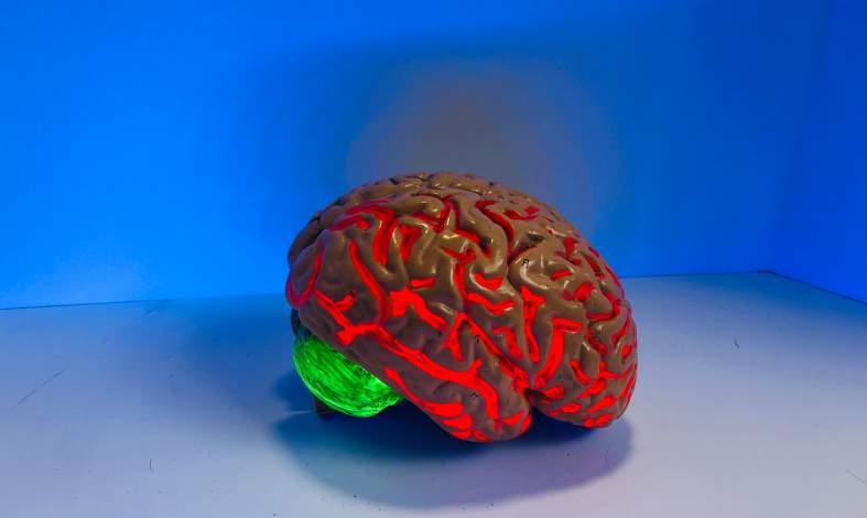 mikloflora jelitowa połączenie oś mózg - jelito