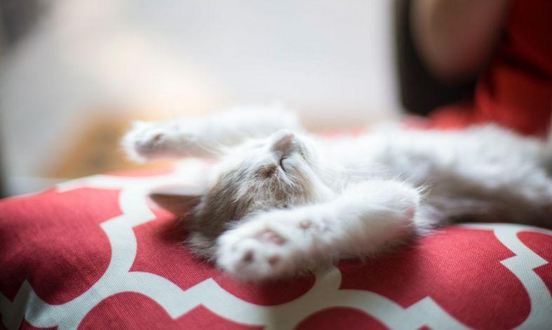 Kiedy sen atakuje znienacka. Czym jest narkolepsja?