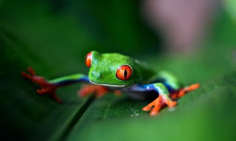 syndrom gotującej się żaby przykłady