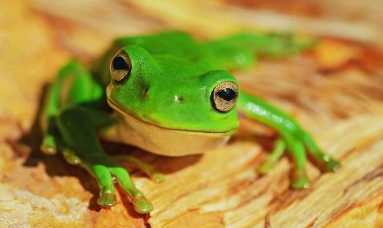 Nie bądź jak gotująca się żaba i w porę powiedz DOŚĆ toksycznej sytuacji