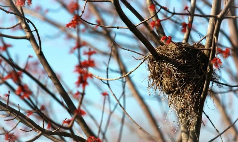 syndrom pustego gniazda przyczyny
