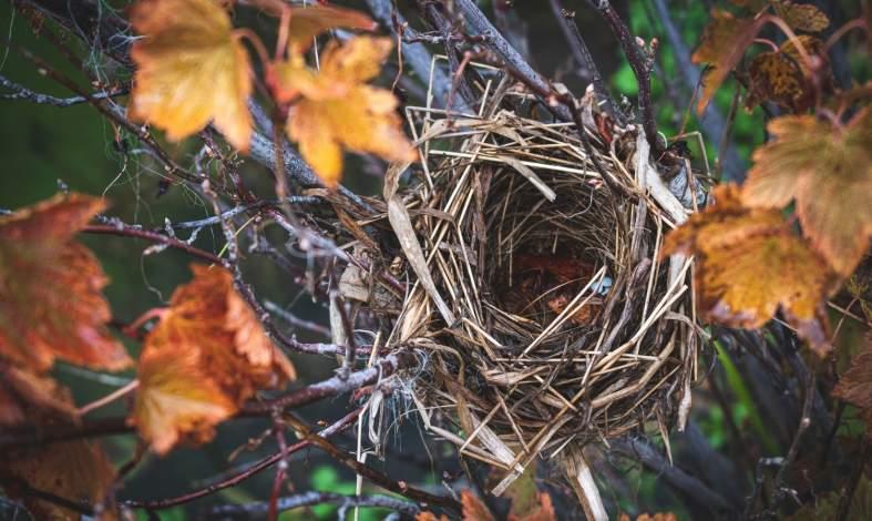 syndrom pustego gniazda objawy