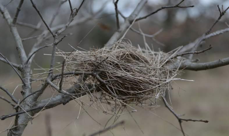 syndrom pustego gniazda co to jest