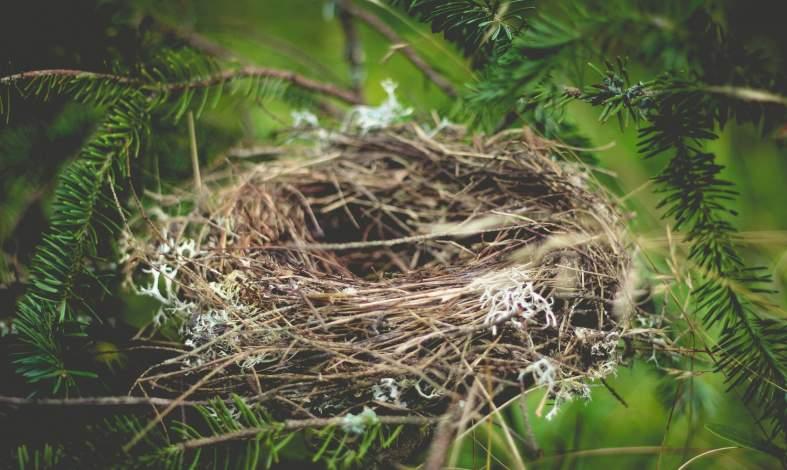 Syndrom pustego gniazda - czym jest i czy można go uniknąć?