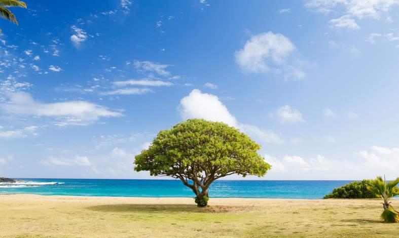 jak interpretować test drzewa