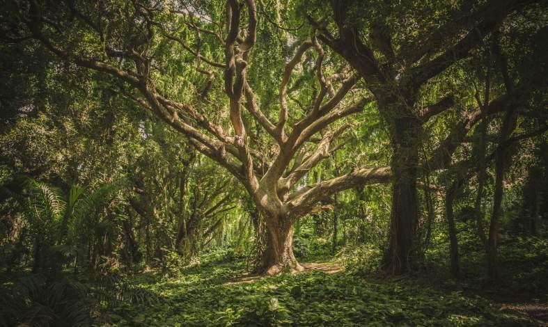 Chcesz wejść głębiej we własną osobowość? Wykonaj test drzewa