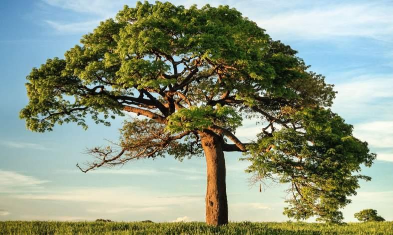 test drzewa