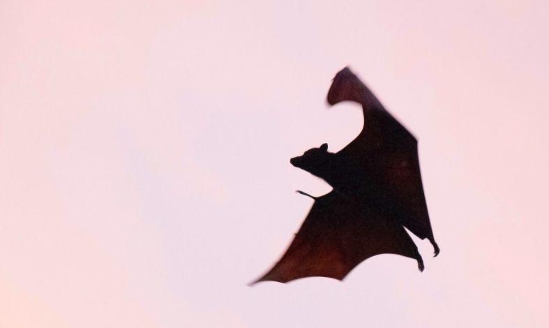 Sposób na wampira emocjonalnego. Jak go rozpoznać i jak sobie z nim radzić?